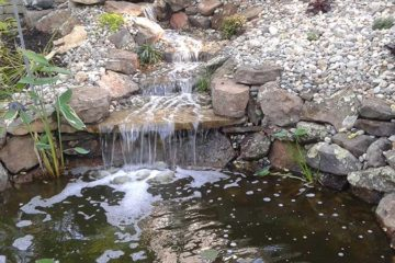 Pond Gallery