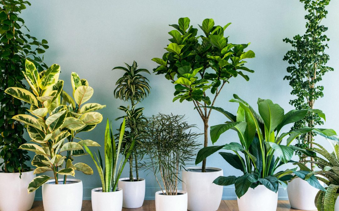 Brighten Up Your Home with Houseplants