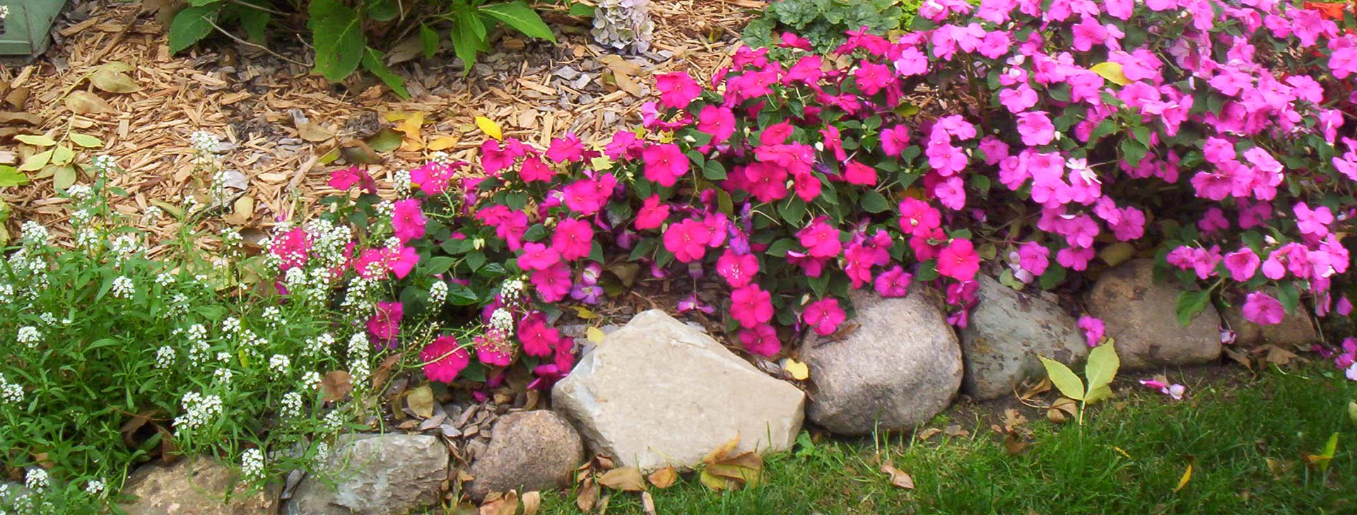 Flower bed in front of house with vibrant pink and purple flowes