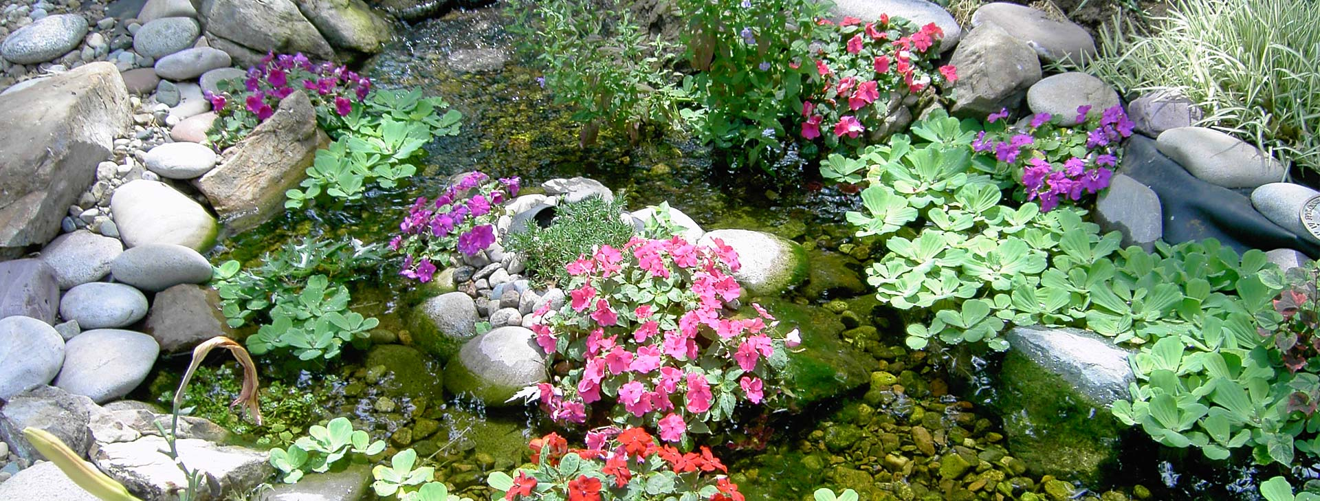 Pond with beautiful flowers and green plants